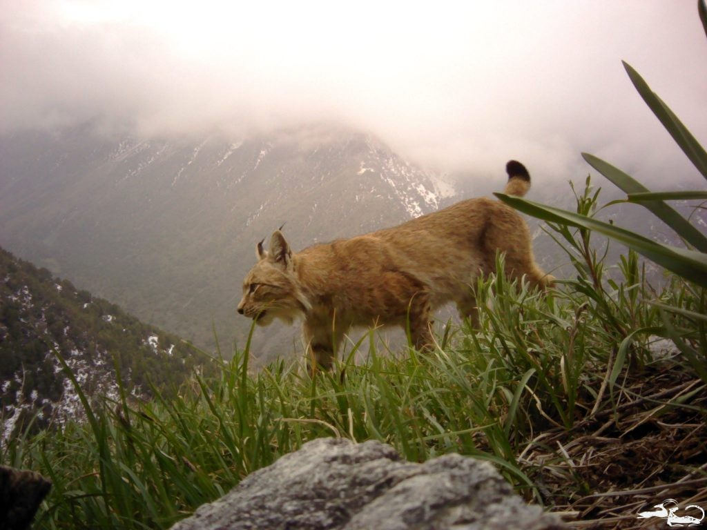 What Kinds of Animals Are Caught in Photo Traps in Central Asia?